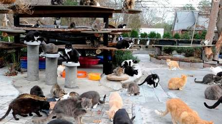 Some of the nearly 300 cats living at