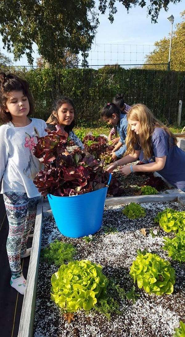 Southampton students work in the school's organic garden