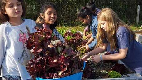 Southampton students work in the school's organic garden