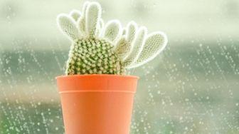 A bunny ears cactus.