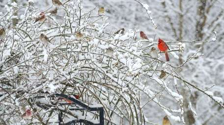 In January, restock bird feeders and provide clean