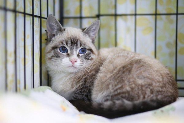 A kitten, the offspring of a feral cat,