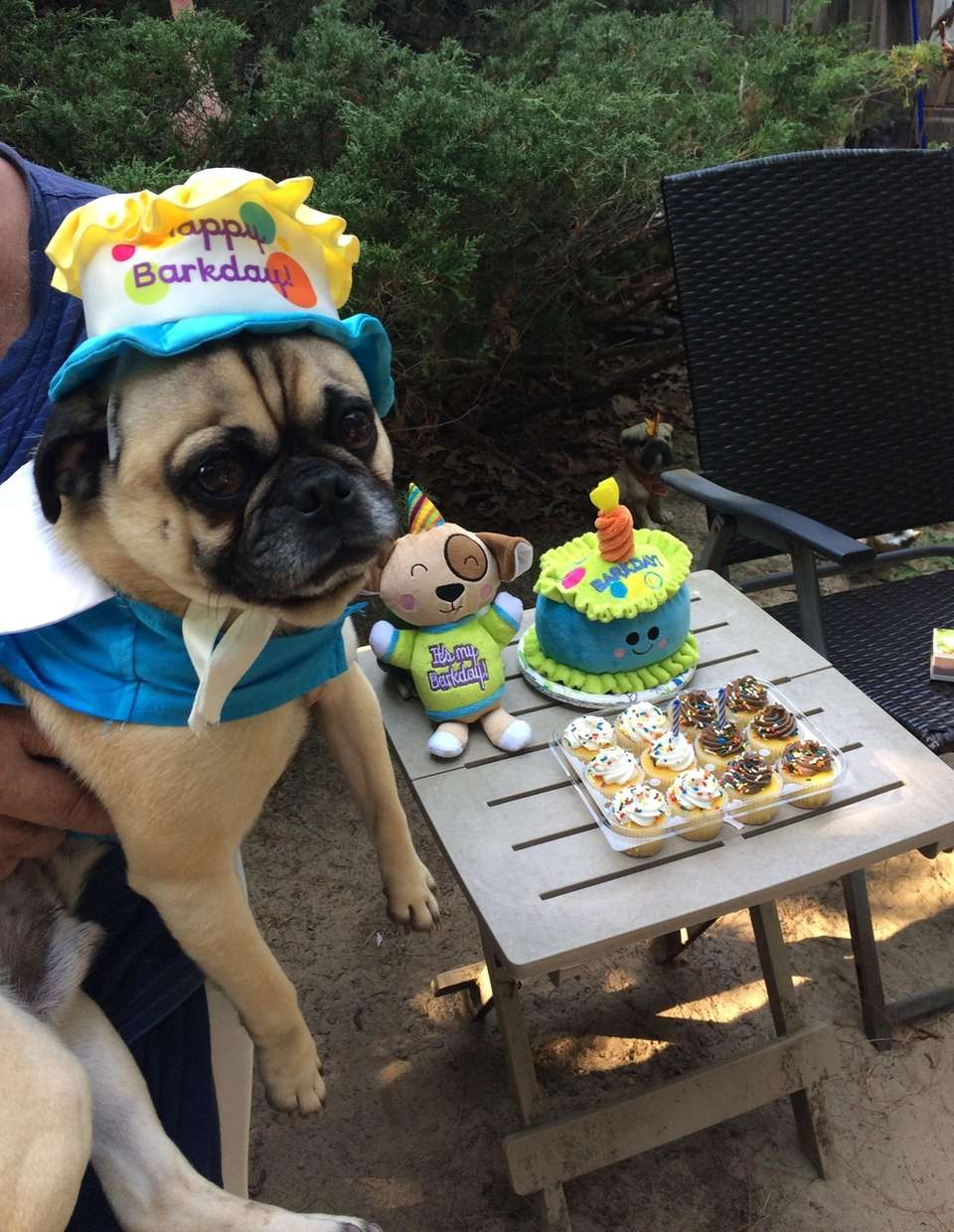 Freddie celebrating his 3rd birthday