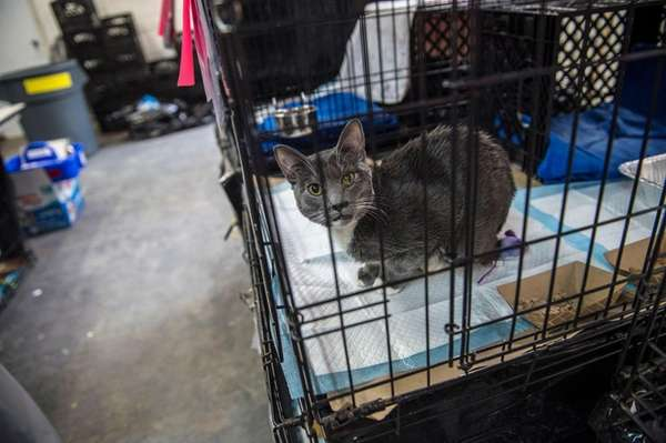 More than 400 cats are being quarantined at