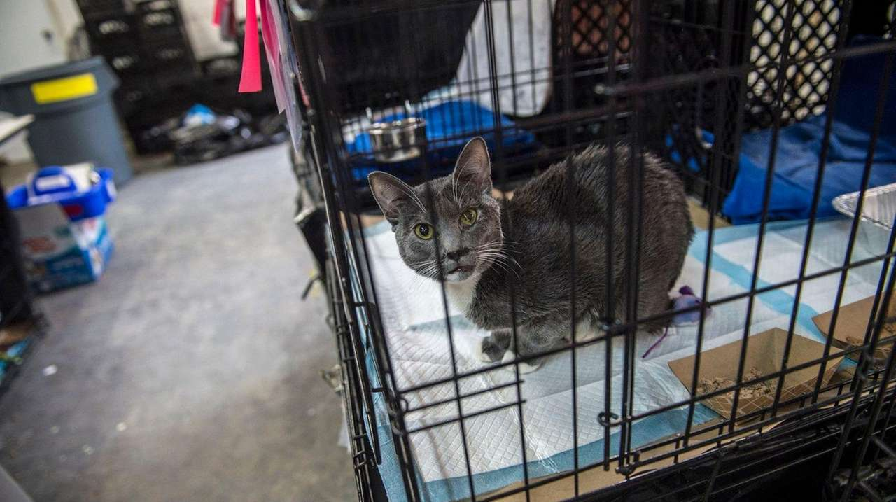 Long Island City warehouse turned into haven for cats with flu virus