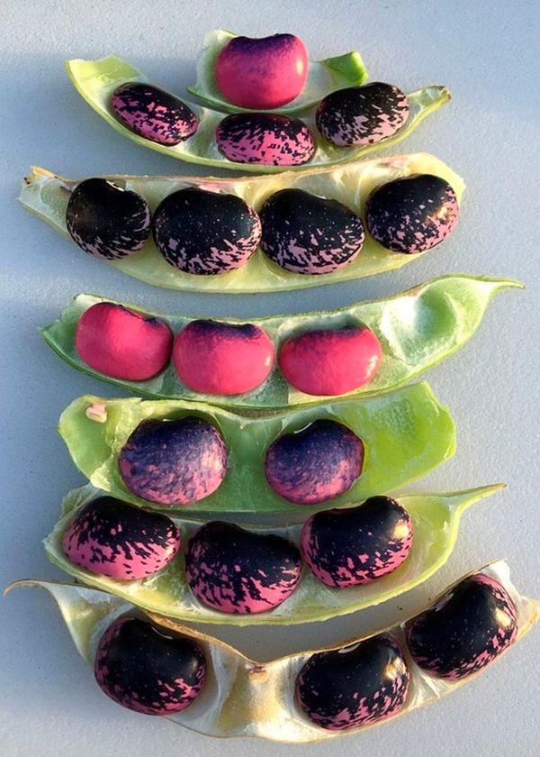 Scarlett runner beans, plus more purple foods to