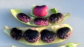 Scarlett runner beans, plus more purple foods to