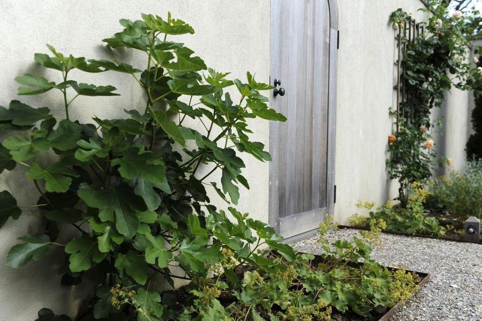 Ina Garten's favorite plant in her herb garden,