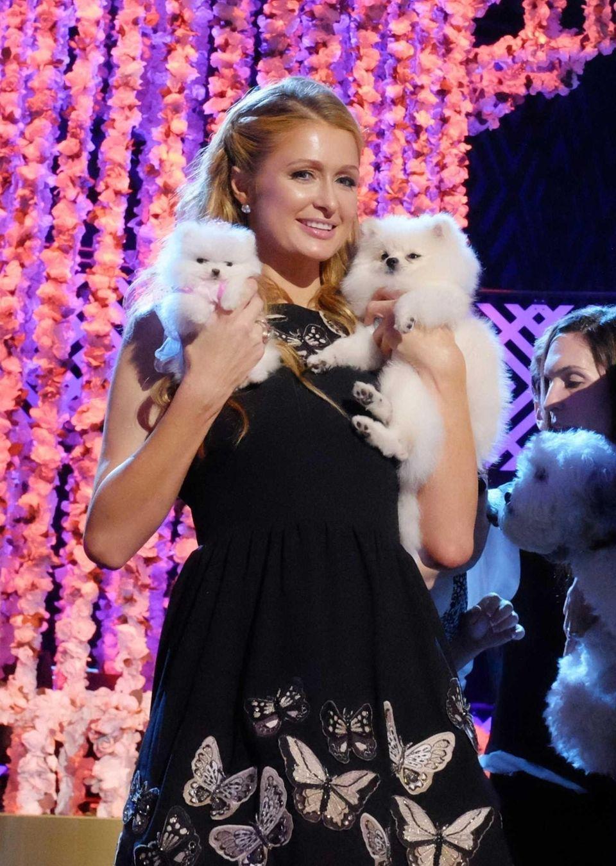 Paris Hilton, accompanied by her Pomeranian dogs, Prince