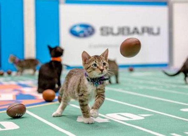Kitten Bowl IV airs on Sunday, Feb. 5
