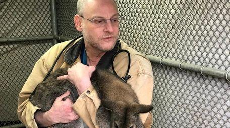 Dr. David Kolins, a veterinarian at Mineola Animal
