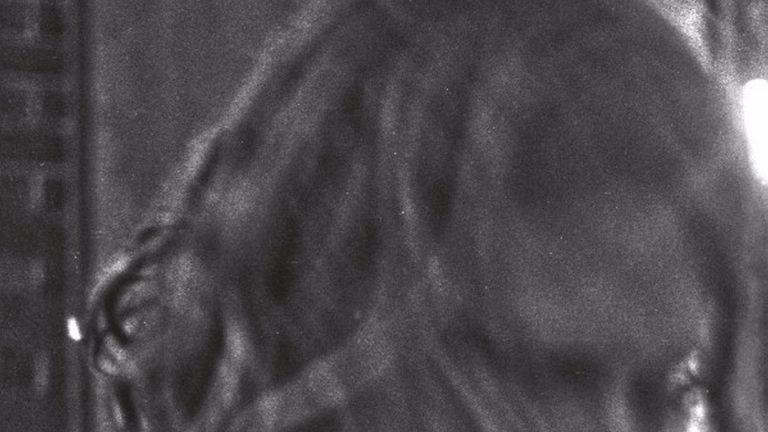 Multi-instrumentalist Ty Segall has a new eponymous album.