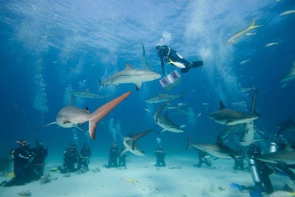 Bahamas scuba divers and Caribbean reef sharks during