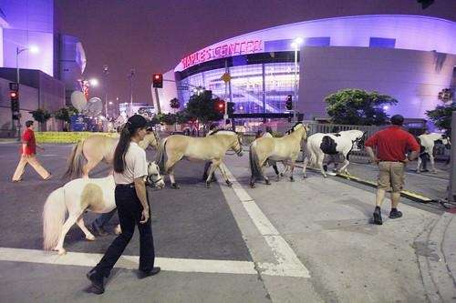 Horses walk to the Staples Center hours before