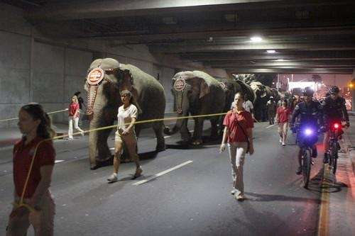 Eleven Asian elephants walk to the Staples Center,