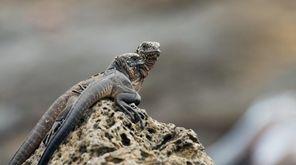 Newborn iguanas in the opening episode of