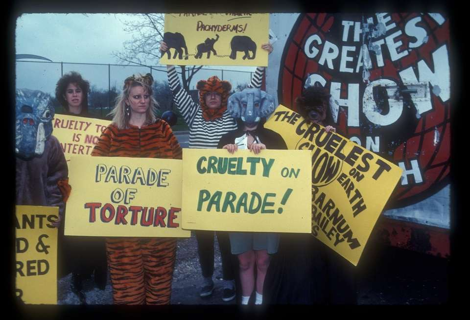 Animal rights activists call attention to Ringling's abuse