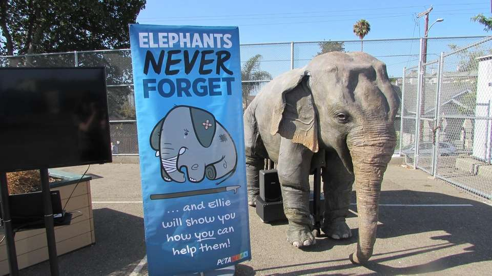 Ellie the mechanical elephant giving a presentation at