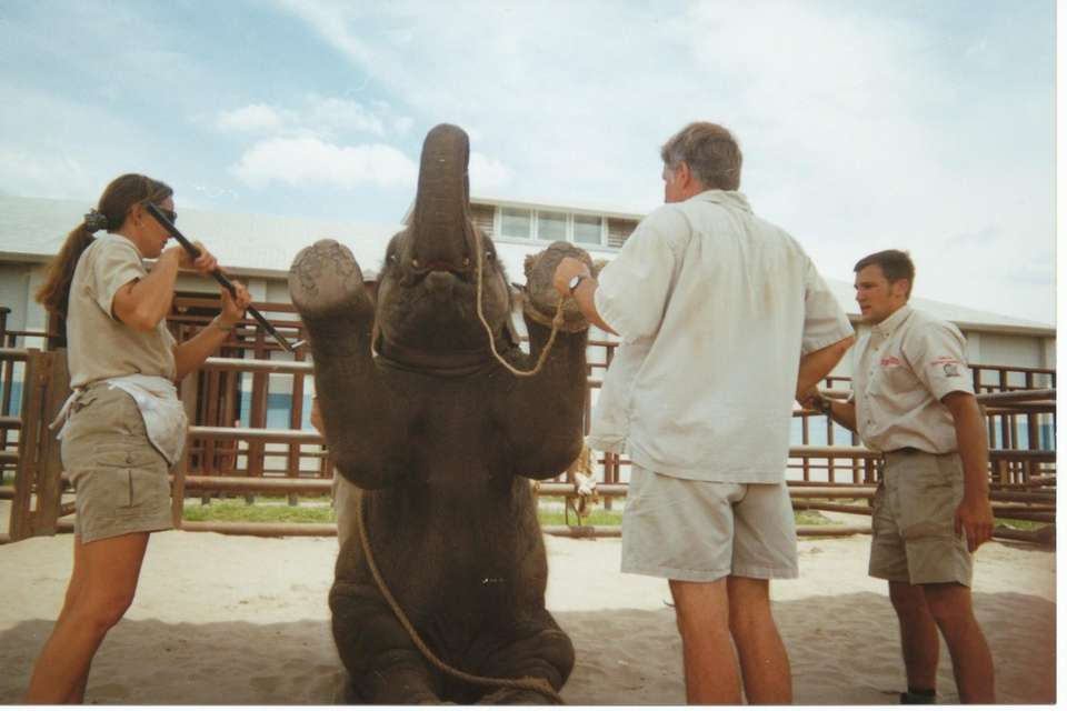 Baby elephant training at the Center for Elephant