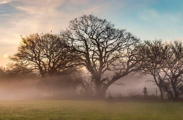 The early morning light over a field and