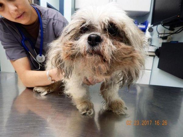 Animal Care Jobs Long Island