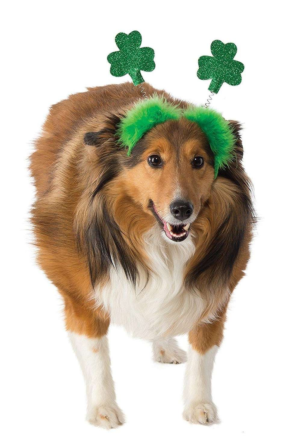 Every dog is Irish on St. Patrick's Day!