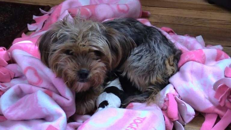 A Yorkshire terrier was rescued Sunday, March 12,