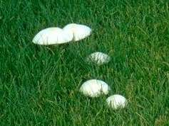 Mushrooms are caused by a fungus, oftentimes from