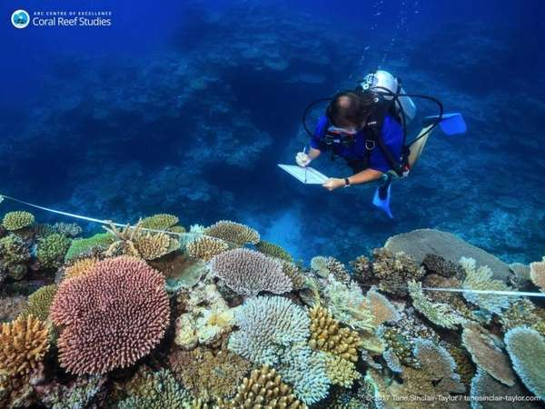 Scientist Andrew Baird survey healthy reefs between Mackay