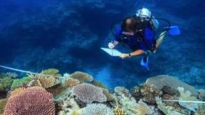 Scientist Andrew Baird survey healthy reefs between Mackay