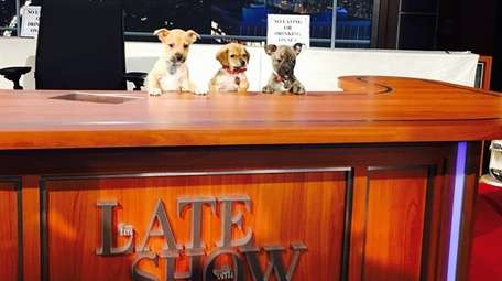Dogs up for adoption at the North Shore