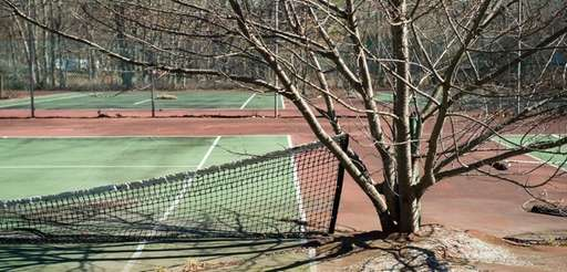 Trees grow through abandoned tennis courts on Accabonac