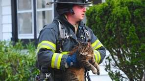 Several cats and dogs were recovered by firefighters