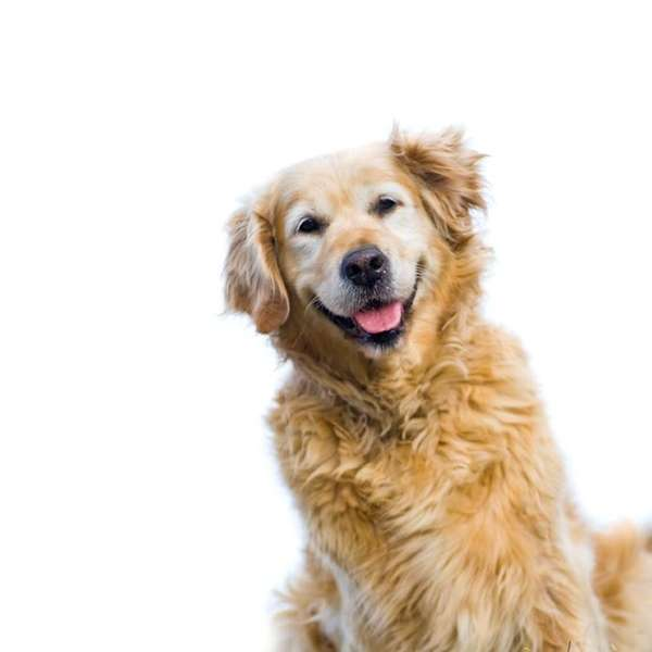 The American Kennel Club offers ways to keep