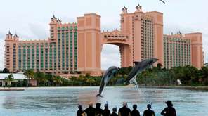 Dolphins jumping at Atlantis Resort on Paradise Island