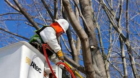 A PSEG Long Island tree trimming contractor clears