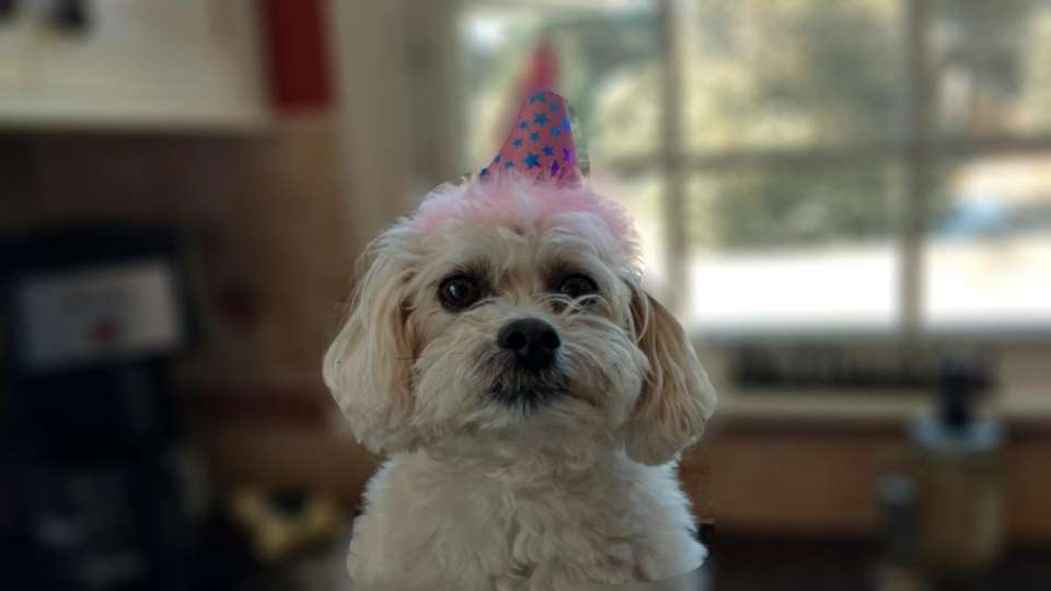 Happy 9th Birthday Abby!