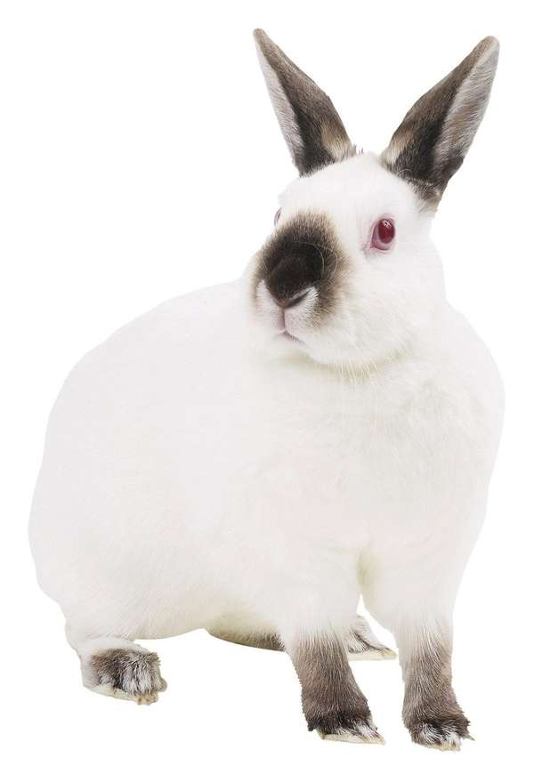 Rabbits are often given as gifts for Easter