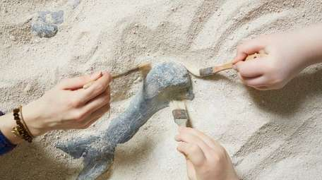Children can look for fossils during Dinosaur Day