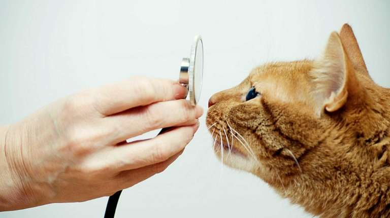 Ringworm, Lyme disease: Illnesses you can get from pets