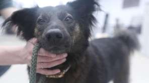 Bonnie is a 4-year-old mixed-breed rescue from Thailand.