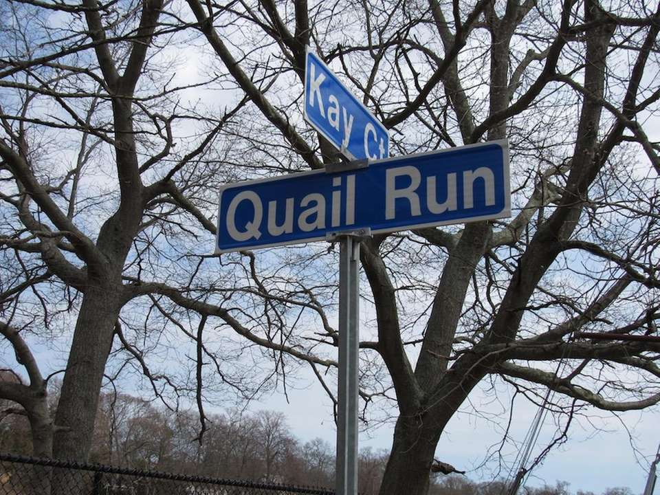 Have you ever seen a quail run? In