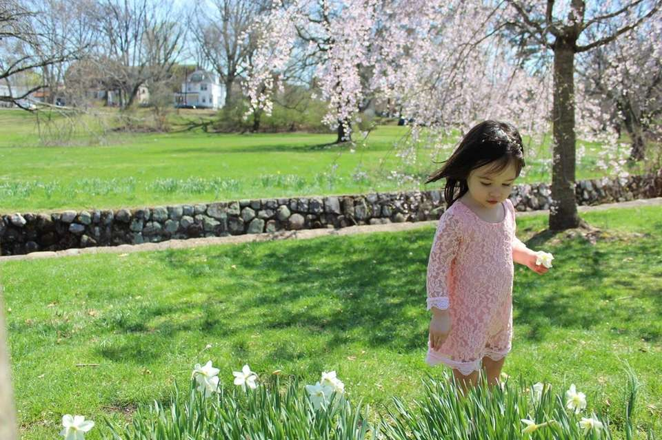 Your spring photos   Newsday