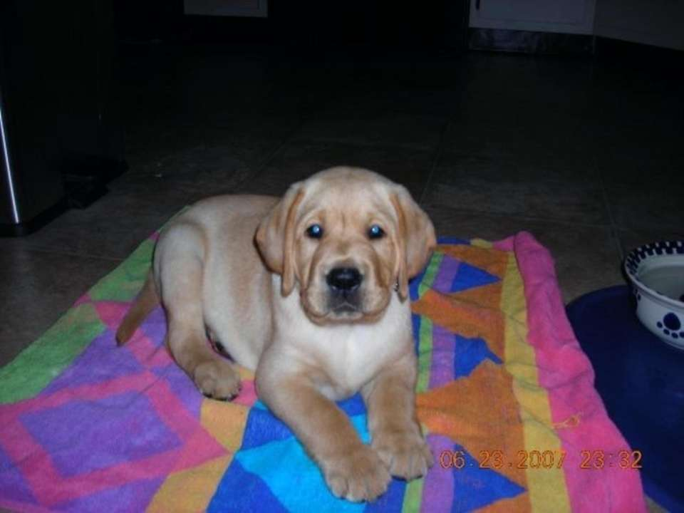 Bodie turns 10 today. From adorable puppy to