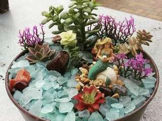 Move over, fairy gardens, there's a new terrarium