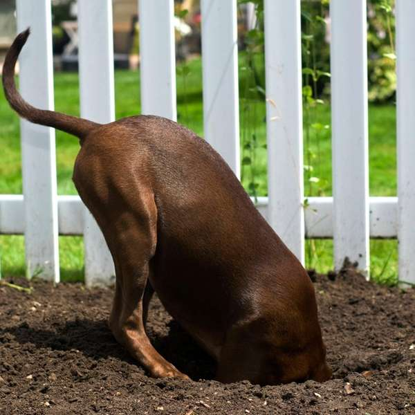 Tips to keep a dog from digging include