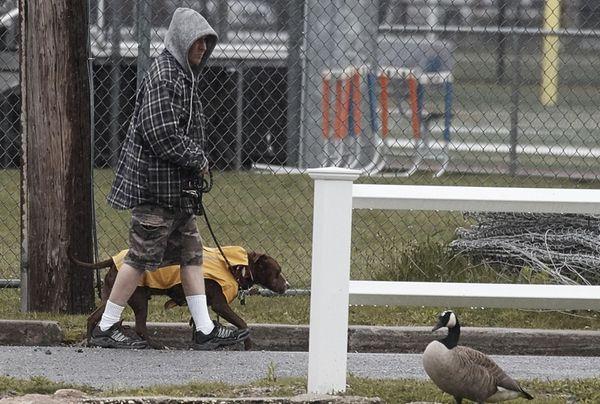 A man walks his dog in the rain