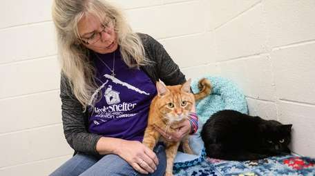 The Little Shelter's cattery manager Dianna Cutolo with