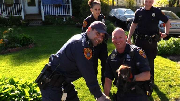 A Chihuahua was rescued on Tuesday, May 16,
