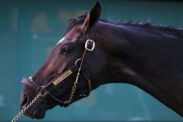 Kentucky Derby winning horse Always Dreaming is bathed